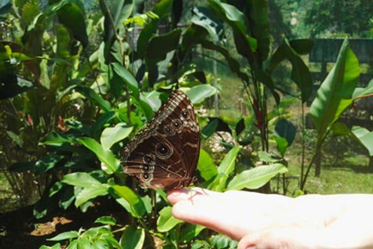 Costa Rica Butterfly